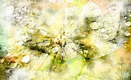 Nature Hybridation Art